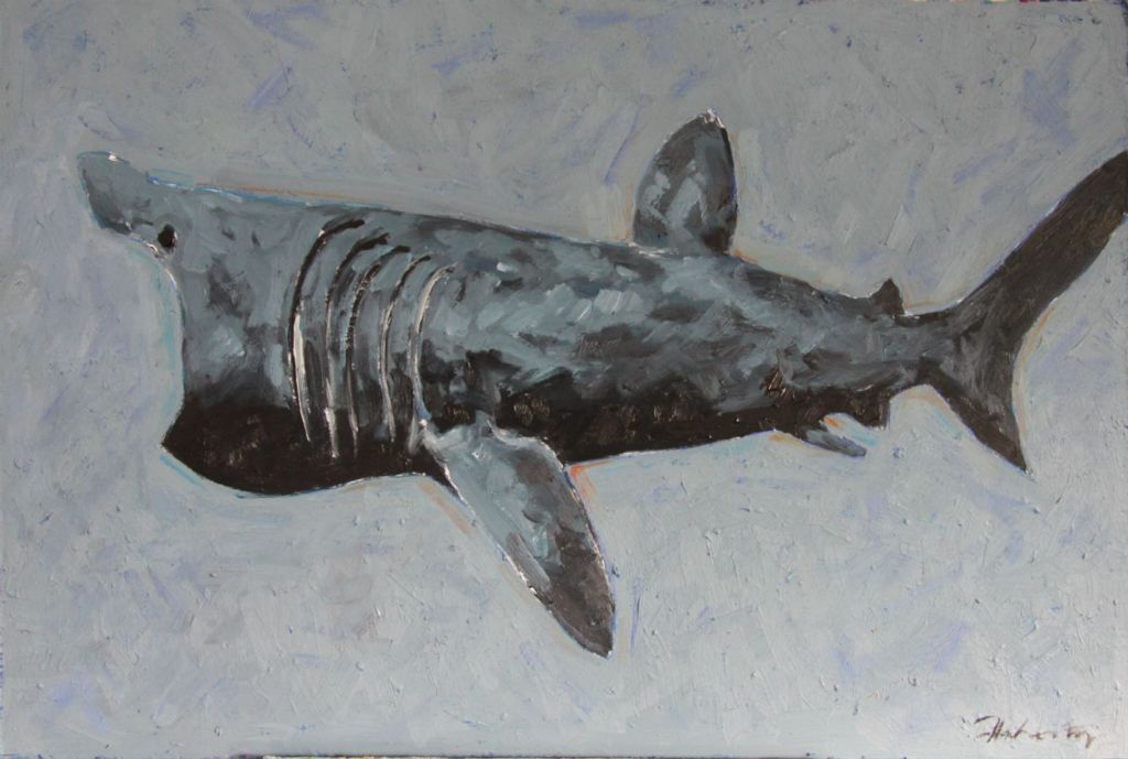 "Michael Flaherty - Basking Shark, 24"" x 36"""